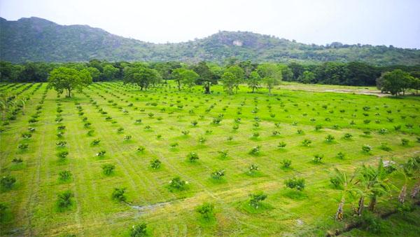 Delmo Plantations